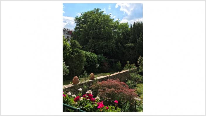Ehemaliges Zurich-Gelände: Bäume sollen erhalten bleiben